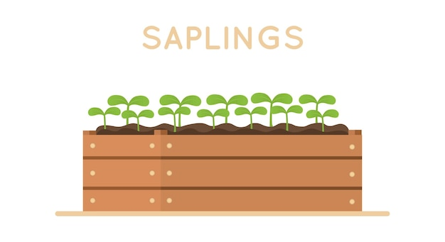 Sapling in wooden box. vector design illustration isolated on white background. design element.