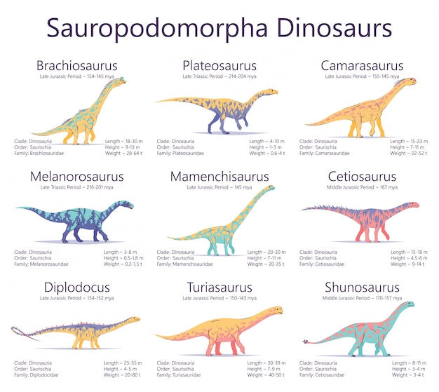 Sauropodomorpha dinosaurs. colorful illustration of dinosaurs isolated on white background. set of ancient creatures with information of size, weigh, classification and period of living.