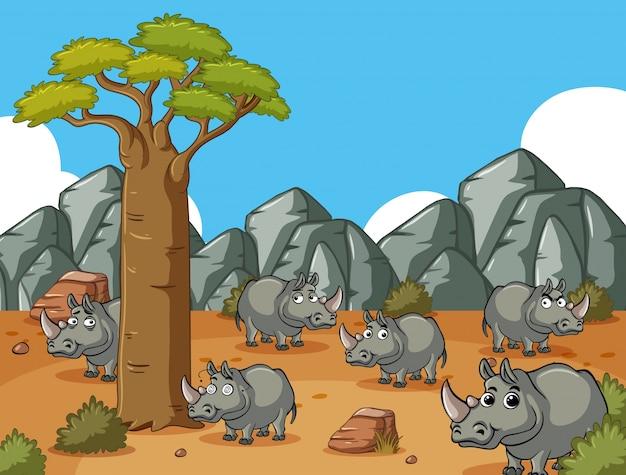 Поле саванны со многими носорогами