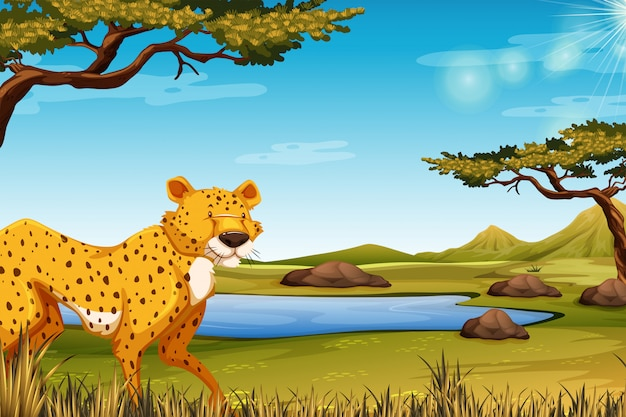 Savanna scene with cheetah
