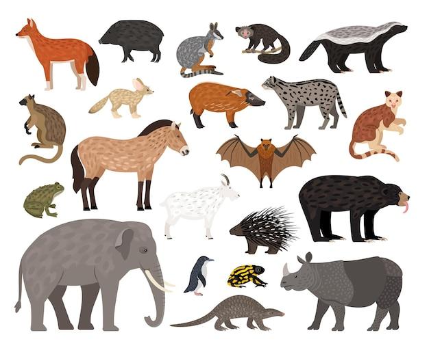 사바나 캐릭터 컬렉션. 야생 동물의 만화 이미지, 아프리카 동물 세트, 동물원 거주자의 벡터 일러스트 레이 션 배경에 고립