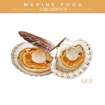 가리비. 해양 음식