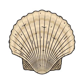 Морская раковина гребешка. изолированные на белом фоне