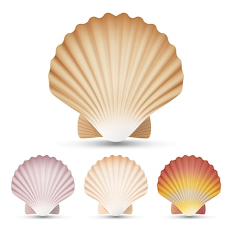 Scallop seashell set