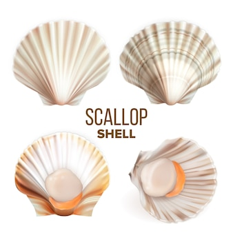 Scallop with meat in shell seafood set