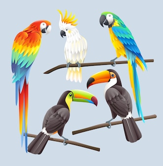 Scarlet macaw, blue macaw, white cockatoo and two toco toucans illustration