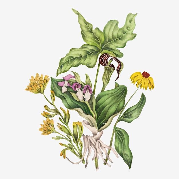 緋色の塗られたカップ、派手な蘭、インドのカブ、およびトウモロコシの花の花束のベクトル