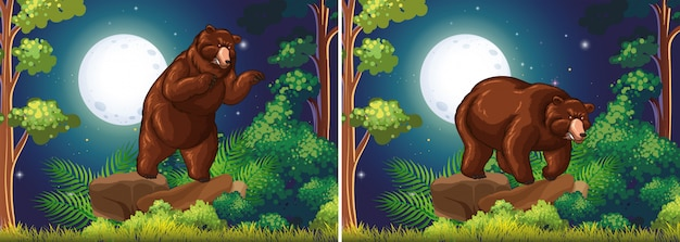 Scene background with brown bear in the forest