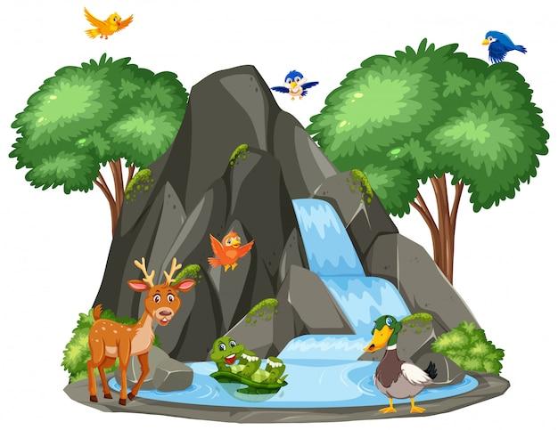 滝のそばの動物のシーン