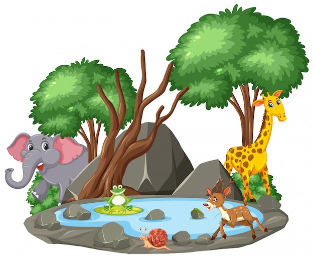 Scene of wild animals and pond
