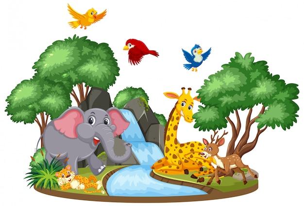 Scene of wild animals at the waterfall
