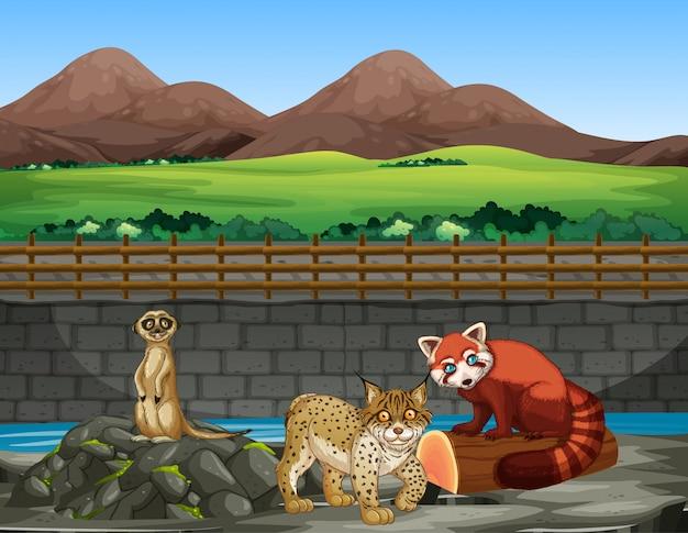동물원에서 동물들과 함께하는 장면