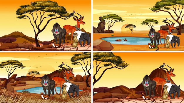 Scene with animals in the savanna fields