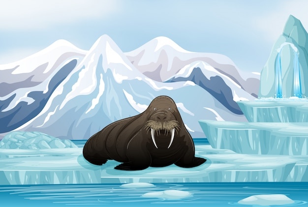 Scene with big walrus on ice