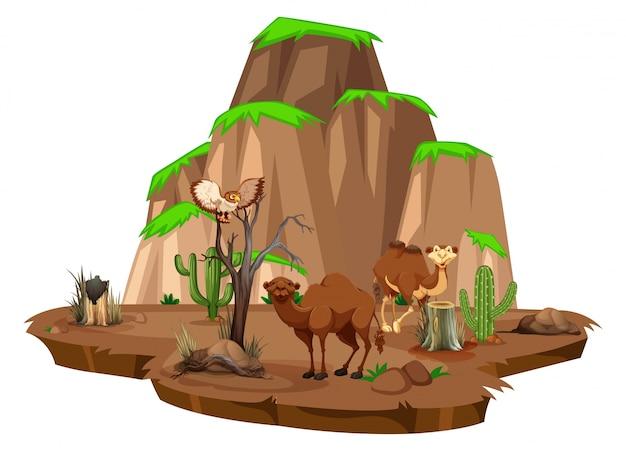 Сцена с верблюдами и совой в поле
