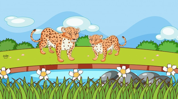 Scene with cheetah in the field