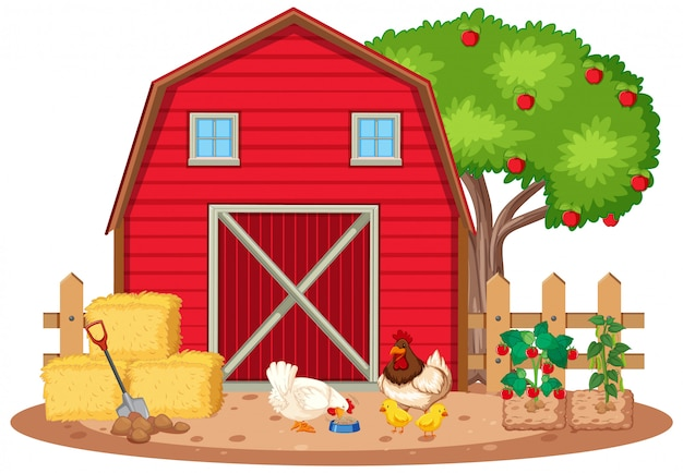 Scene with chickens and vegetables on the farm