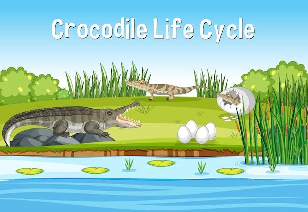 Scena con il ciclo di vita di crocodie