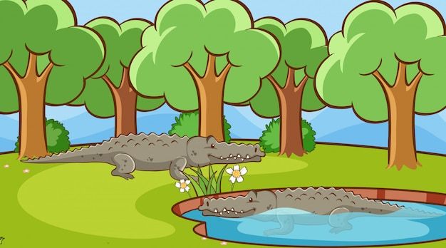 Scene with crocodiles in the park