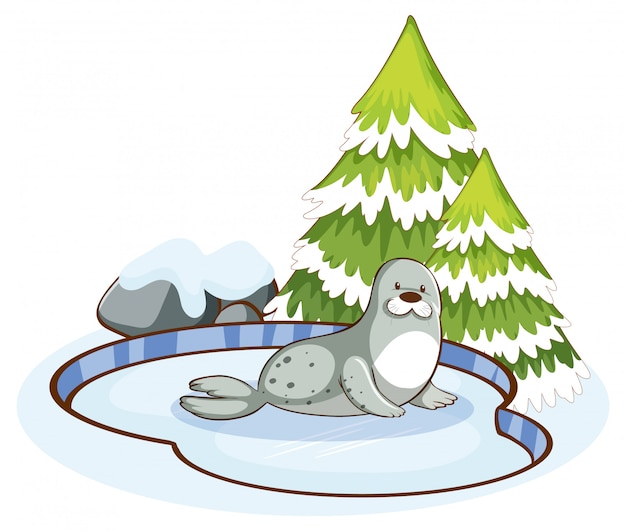 Scene with cute seal in the snow