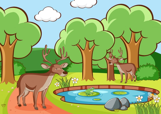 Scene with deers in forest