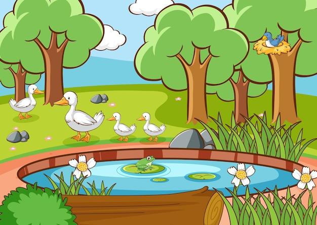 Scena con anatre e uccelli in riva al laghetto