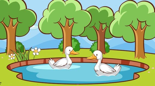 池にアヒルがいるシーン
