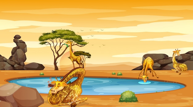 Scene with giraffes by the pond