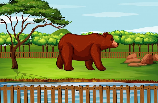 Scene with grizzly bear in the zoo