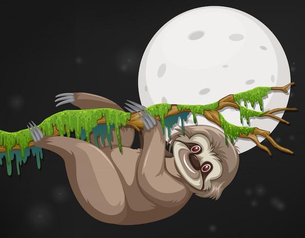 Сцена со счастливым ленивцем, висящим на ветке ночью