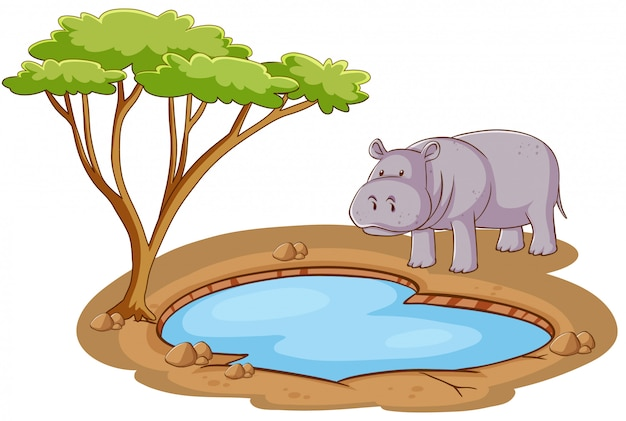 Scene with hippo standing by the pond on white background