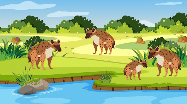 Scene with hyenas by the river