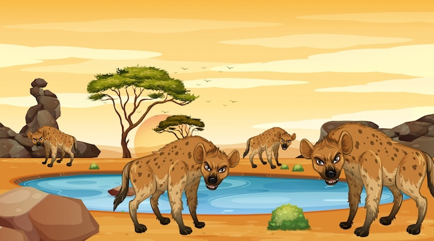 Scene with hyenas in the dersert
