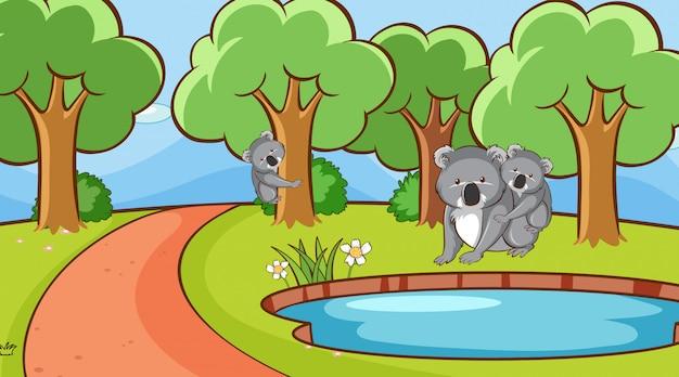 公園でコアラとのシーン