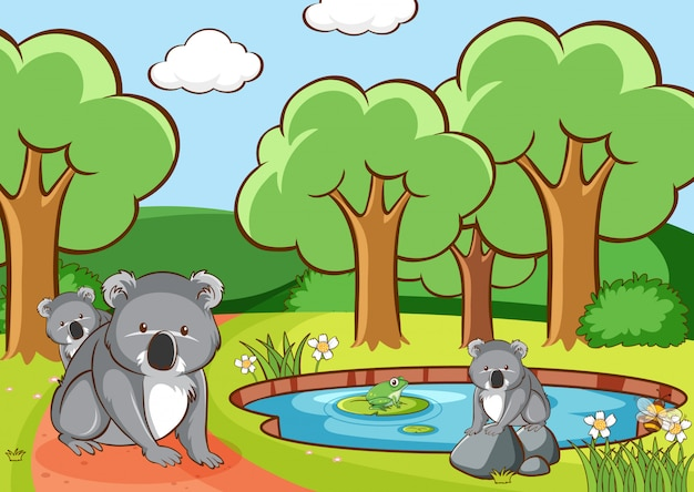 Scene with koala in the park