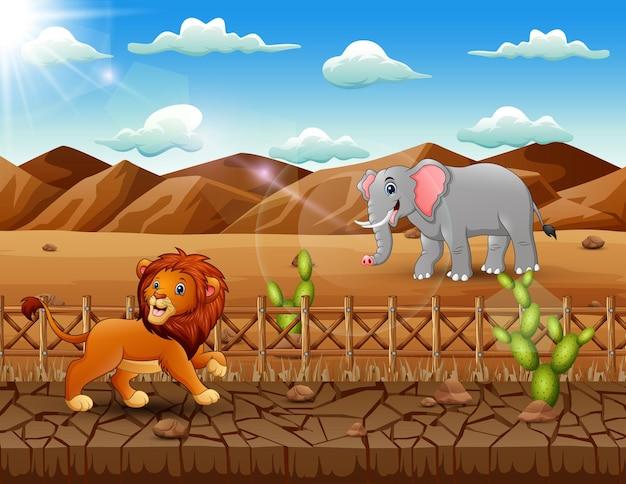 乾燥した土地のイラストでライオンと象のシーン