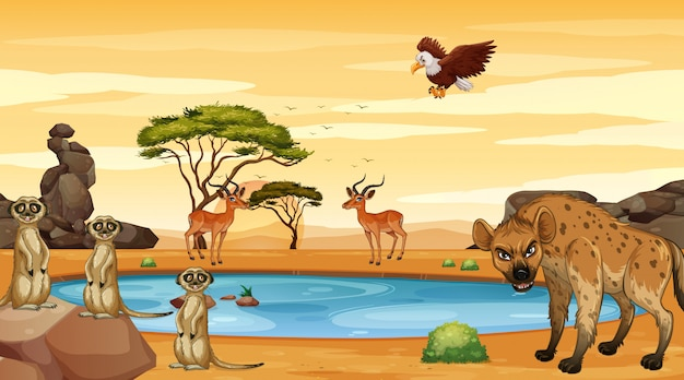 池のそばにたくさんの動物がいるシーン
