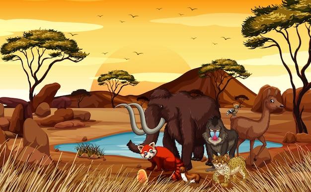 Scena con molti animali sul campo