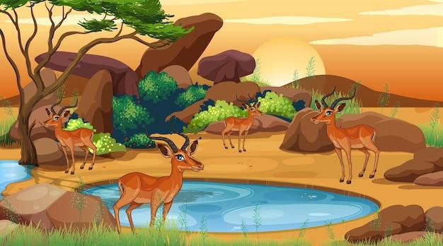 オープン動物園で鹿がたくさんいるシーン