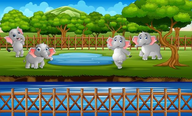 많은 코끼리가 동물원 공원에서 놀고있는 장면