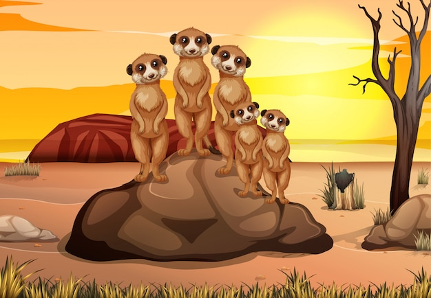 Scene with many meerkats standing on the rock