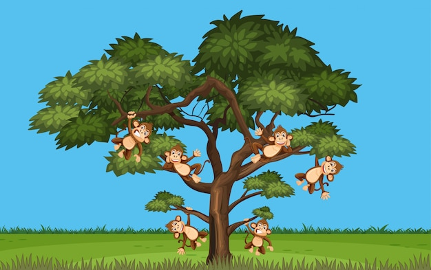 Scene with many monkeys hanging on the tree
