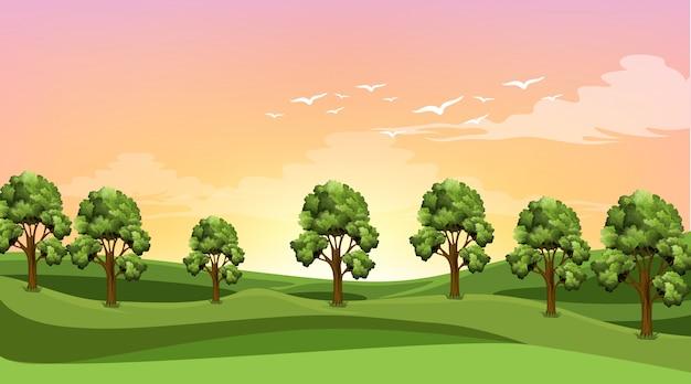 필드에 많은 나무가있는 장면