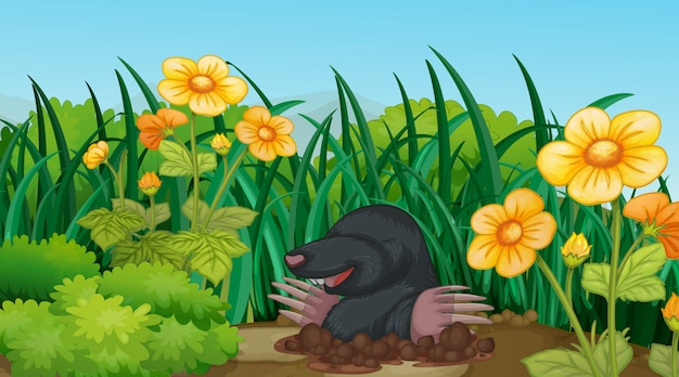 Scene with mole in the garden