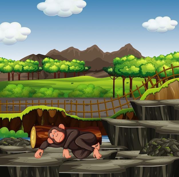 Scena con scimmia nello zoo