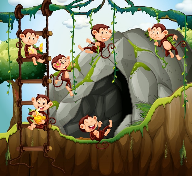 洞窟で遊んでいる猿の場面