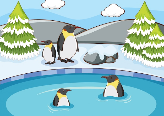 Scene with penguins in winter