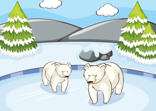 Scene with polar bears in winter