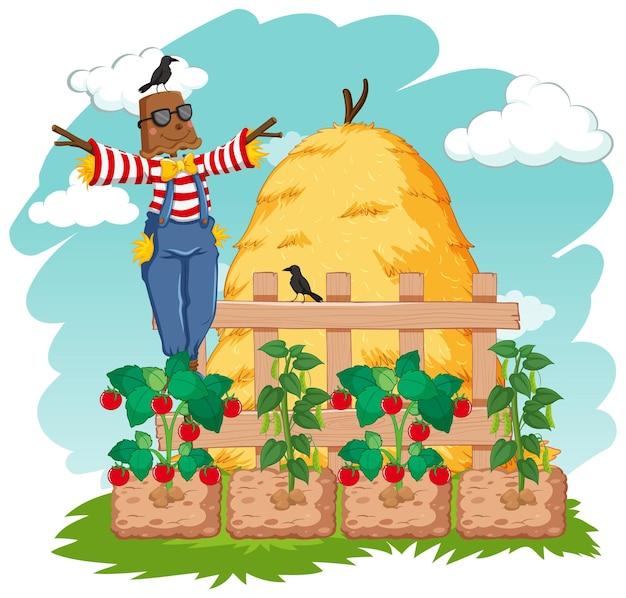 Scene with scarecrow in vegetable garden