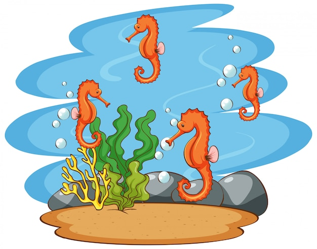 Scene with seahorses in the ocean